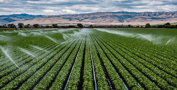 field-irrigation_1096520492_600x305